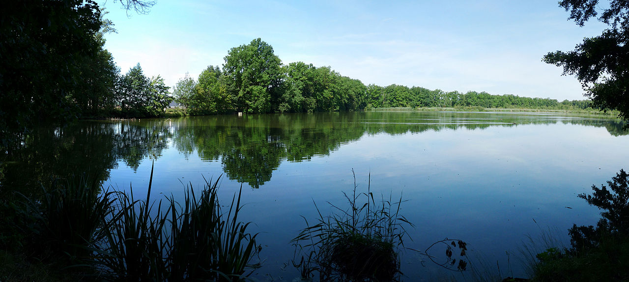 Nový rybník u Soběslavi - Jitka Erbenová - Wikimedia.org